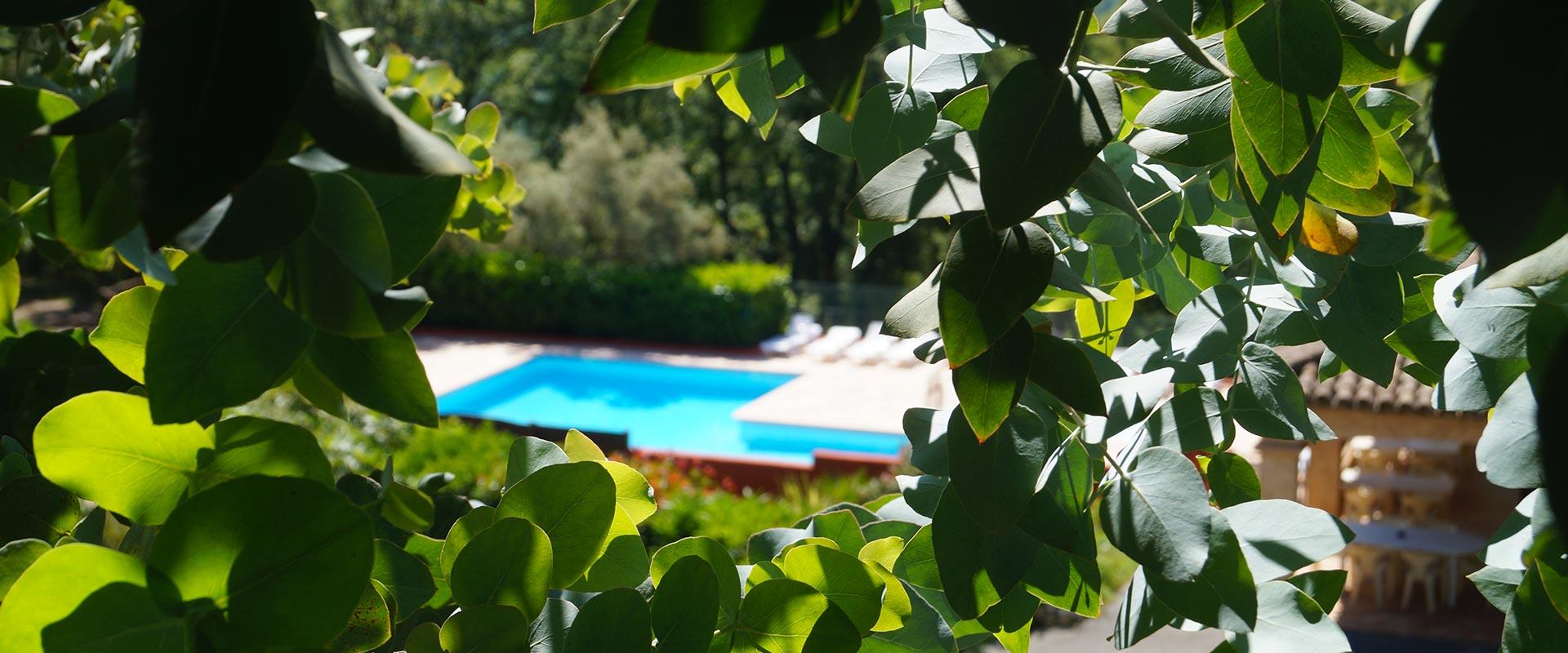 Het zwembad van de eucalyptusbomen